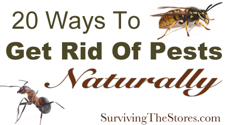 how to naturally get rid of pests with no harmful